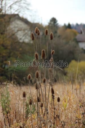 frankreich natur herbst lac de brenets
