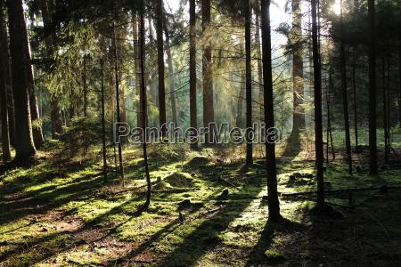 wald baeume sonnenschein herbst natur ruhe