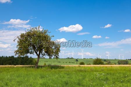 windkraft baum auf der wiese