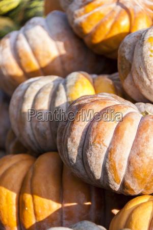 muscade de provence cucurbita pumpkin kuerbis