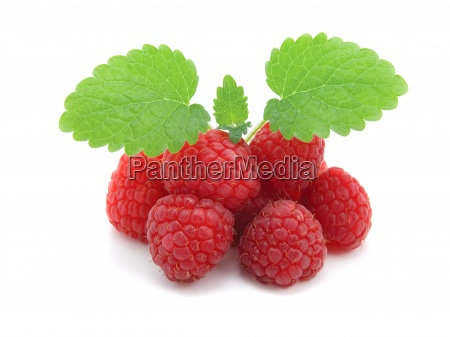 raspberries with green leaves on white