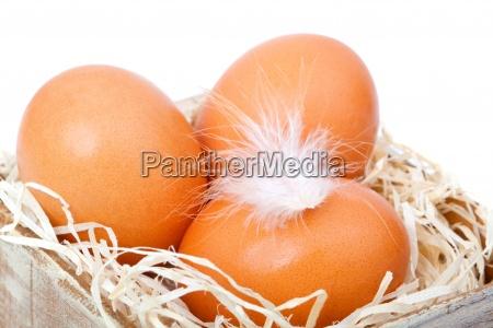 brazowe jaja na sianie w starym