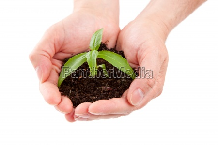 green plant in a man hand