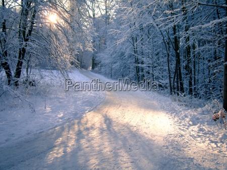 baeume im winter