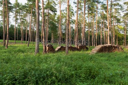 wald, mit, brennholz - 13299384