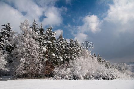 idyllic forest in winter