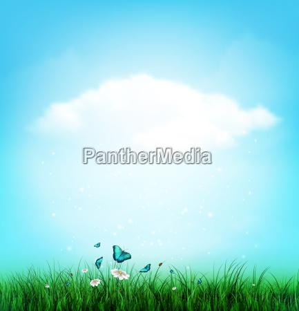 sommer wolke himmel gras blumen und