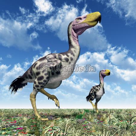 terrorvogel kelenken