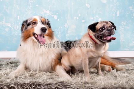 zwei hunde zusammen