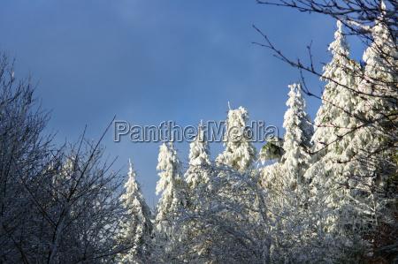 winterimpressionen im sauerland