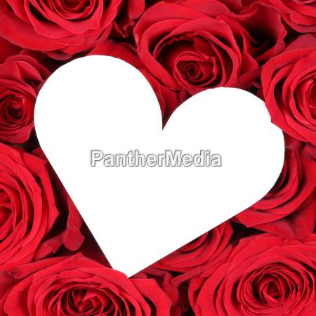 rote rosen mit herz als liebe