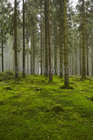 forest with moss