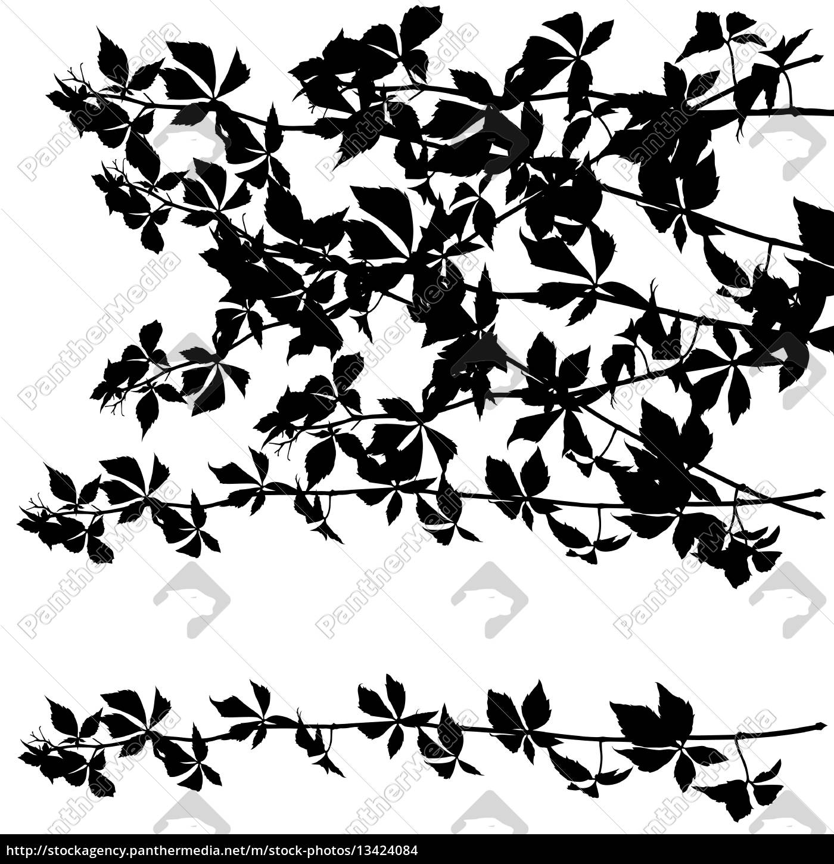 gruselige, zweige, silhouetten - 13424084