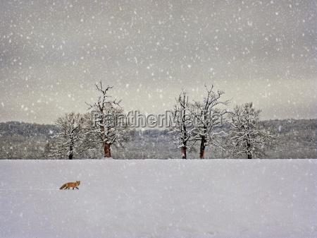 vintage winter fotografie