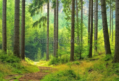 wald forest 40