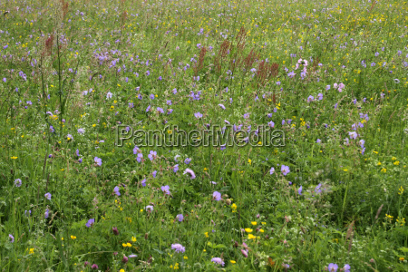 colorful summer meadow