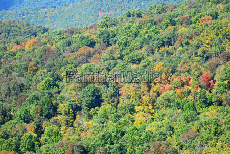 fall color shenandoah national park