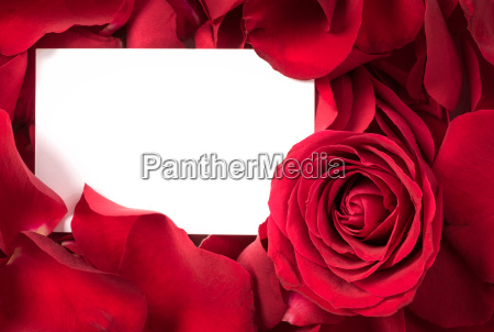 rosen blumenblaetter mit karte