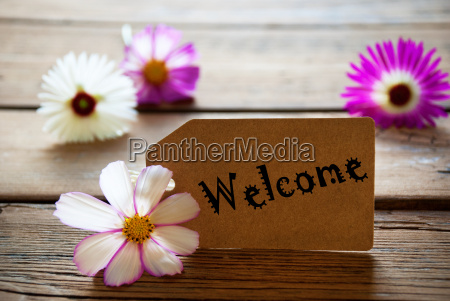 label with text welcome with cosmea