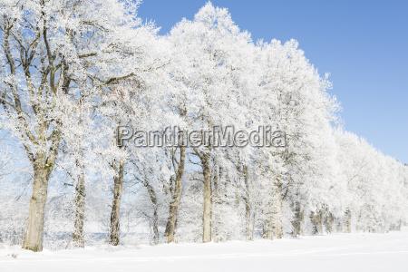 albero alberi inverno nebbia paesaggio invernale