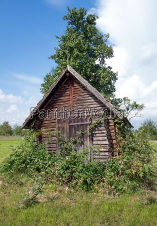 overgrown with blackberries woodshed
