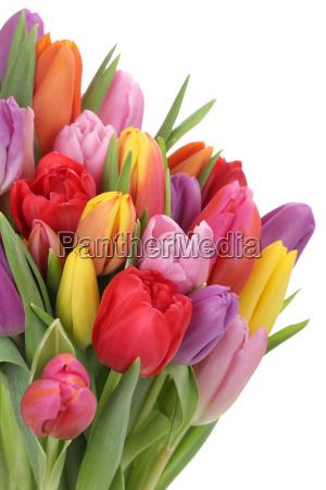 blumenstrauss mit tulpen im fruehling oder