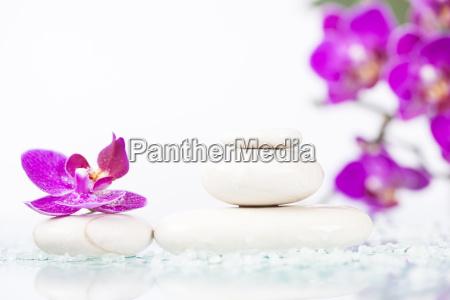 spa stillleben mit rosa orchidee und