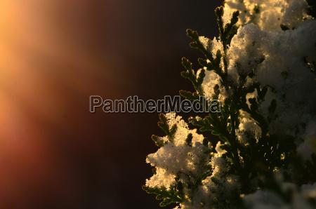 schnee im sonnenlicht