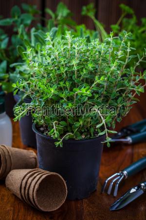 das einpflanzen kraeuter