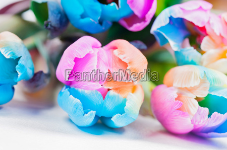 bouquet of strange multicolored tulips