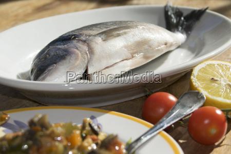 sardellen und tintenfische des mittelmeers