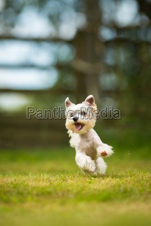 netter kleiner hund der beweglichkeitsbohrgeraet