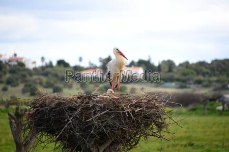 stOErche im nest spanien