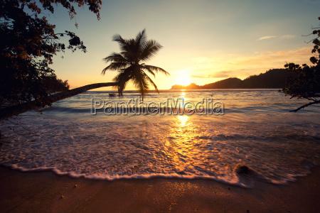 sommer sonne palmenstrand