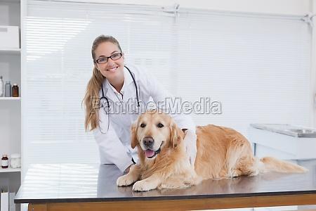 laecheln tierarzt untersucht ein labrador