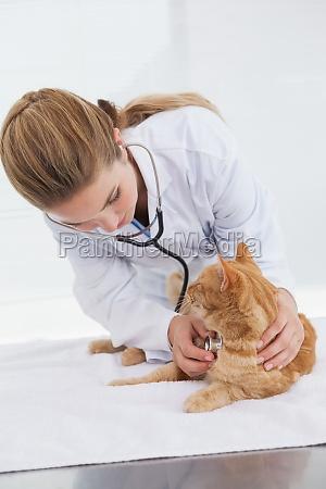 vet pruefung eines katzenherzschlag