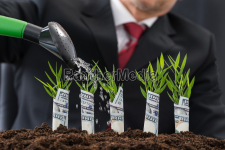 businessman watering money plants