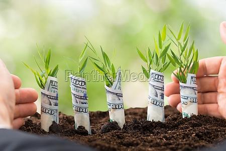 businessman protecting sapling