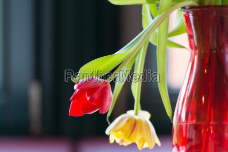 welkende tulpen