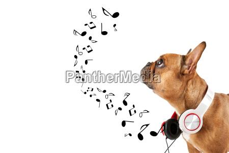 hund hoert musik