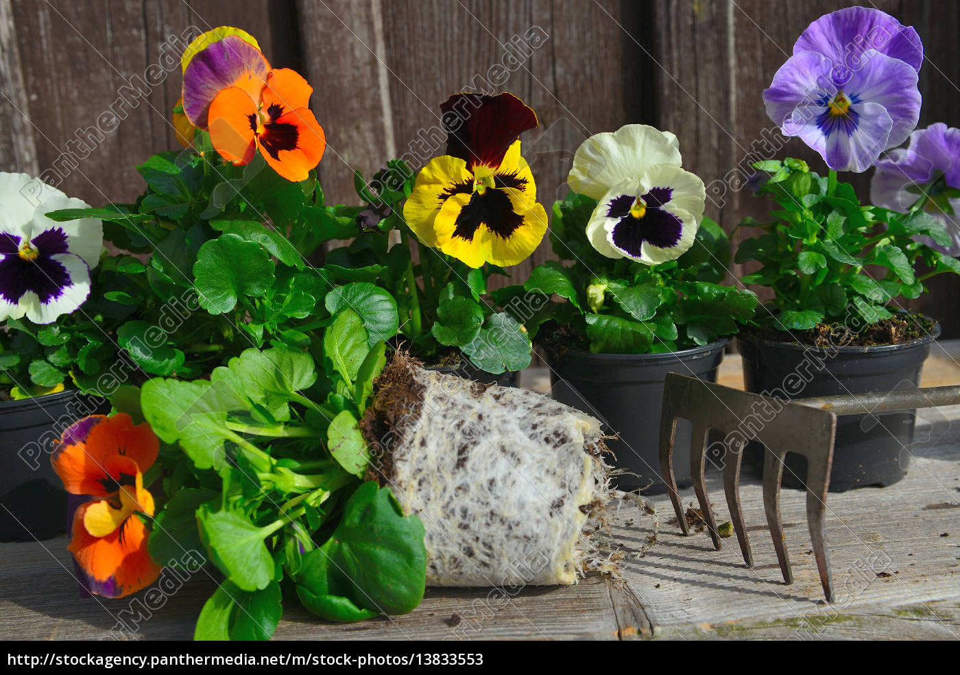 frühling blumen pflanzen - lizenzfreies bild - #13833553
