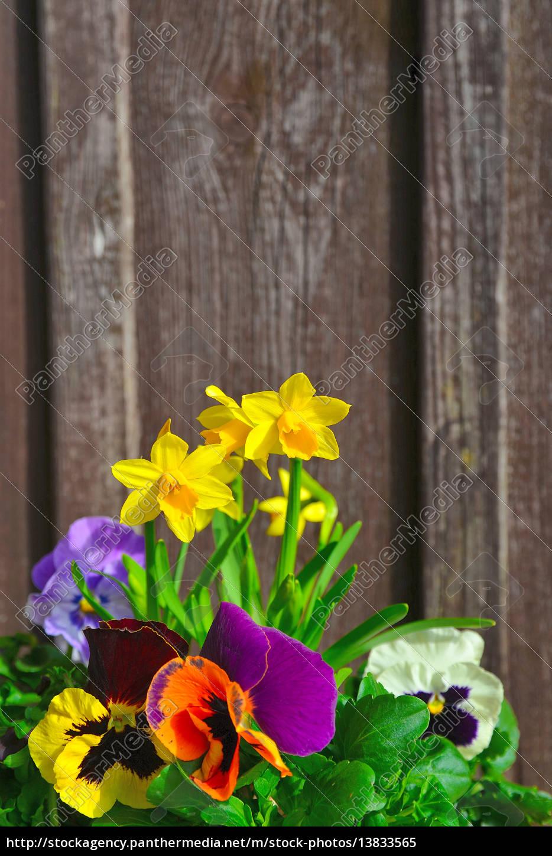 frühling blumen pflanzen - lizenzfreies bild - #13833565