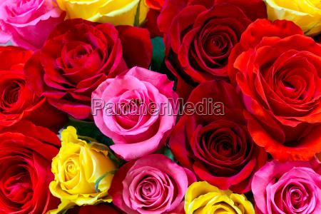 bunte rosen hintergrund ansicht von oben