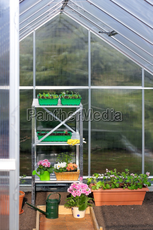 greenhouse with first seedlings
