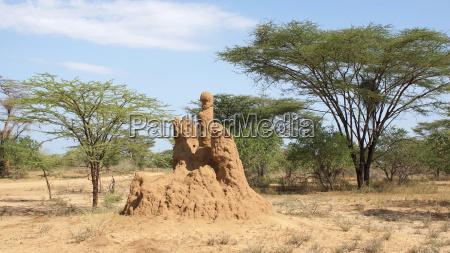 termitenbau AEthiopien afrika