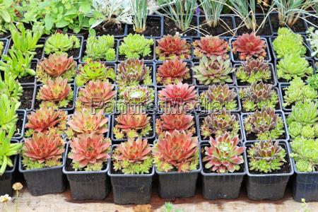 gartencenter pflanzen