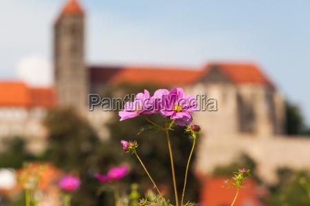 view to quedlinburg castle and collegiate