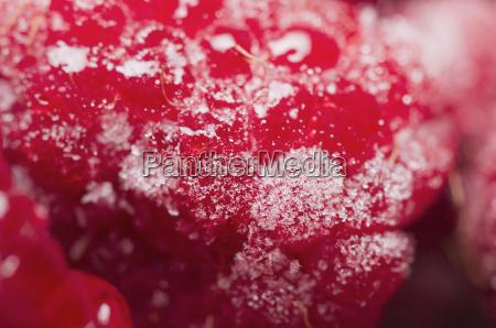 raspberries juicy near