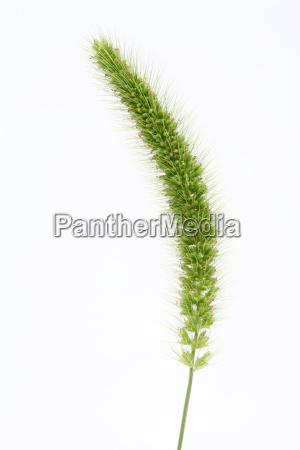 wiese gras rasen gruenflaeche frisch laub