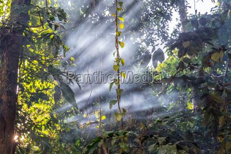 jungle light beams